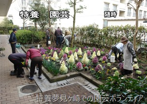 特養夢見ヶ崎での園芸ボランティア
